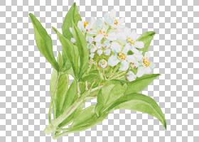 水彩植物叶子枝条花卉免扣元素素材