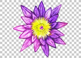 紫色小花免扣元素