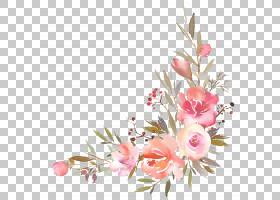 水彩花边框