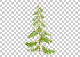 水彩植物叶子枝条树木免扣元素素材