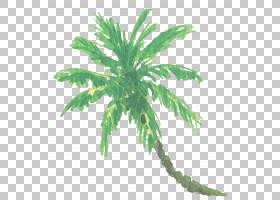 水彩椰子树免扣元素素材