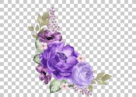 紫色的花卉