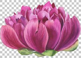 植物花卉元素水彩插画免扣素材