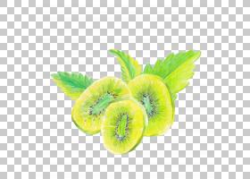 猕猴桃手绘插画免扣元素素材