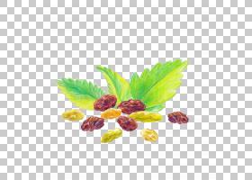 葡萄干手绘插画免扣元素素材