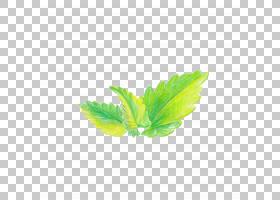植物叶子手绘插画免扣元素素材图片