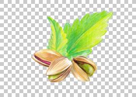 坚果手绘插画免扣元素素材图片