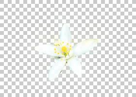 手绘水彩白色花卉免扣插画素材图片
