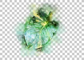 手绘水彩植物叶子免扣插画素材图片