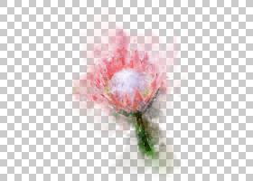 手绘水彩花卉免扣插画素材图片