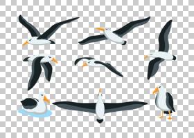 鸟的剪影,不会飞的鸟,鸟儿,喙,海鸟,剪影,绘图,信天翁,企鹅,