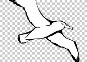 鸟类线画,弯头,脚,海鸥,野生动物,手指,着色手册,脖子,尾巴,手,黑