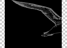 鸟类线画,羽毛,尾巴,脖子,手,鸭子,鹅和天鹅,机翼,水鸟,野生动物,
