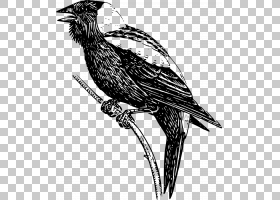 鸟类线画,葫芦科,鸣鸟,猛禽,尾巴,野生动物,羽毛,机翼,黑白相间,