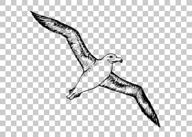 鸟类线画,隼形目,野生动物,游隼,鱼鹰,欧洲鲱鸥,线条艺术,尾巴,机