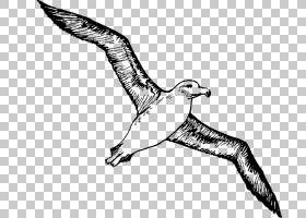 鸟类线画,鸭子,鹅和天鹅,黑白相间,手,喙,羽毛,尾巴,手臂,机翼,绘