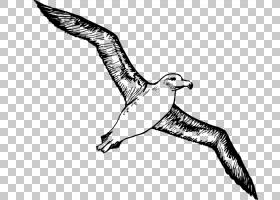 鸟类线画,鸭子,鹅和天鹅,黑白相间,鸟儿,手,喙,羽毛,尾巴,机翼,脖