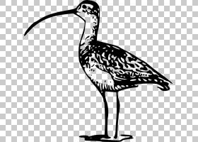 鸟线艺术,滨鸟,黑白相间,机翼,起重机,环形目,野生动物,线条艺术,