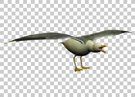 鸟线艺术,鸭子,鹅和天鹅,机翼,喙,动物形象,羽毛,水鸟,野生动物,