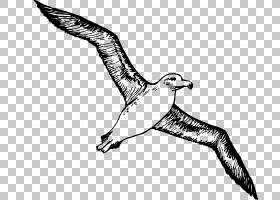 鸟线艺术,鸭子,鹅和天鹅,黑白相间,喙,尾巴,机翼,野生动物,羽毛,