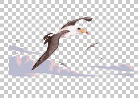 鸟翼,机翼,手,黑脚信天翁,羽毛,绘图,水鸟,鸟儿飞行,信天翁,喙,飞