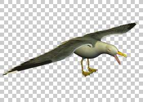 鸟翼,机翼,海鸟,喙,羽毛,鸟儿,海鸥,水鸟,信天翁,欧洲鲱鸥,网站,