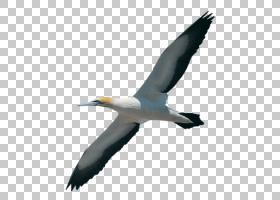 鸟翼,海鸟,硫磺酸盐,机翼,滨鸟,电子邮件,剪贴簿,水手,羽毛,涉水