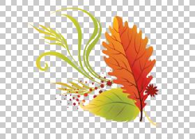 秋季图案背景,图案,桔黄色的,树,演示文稿,枫叶,博客,叶,秋叶颜色