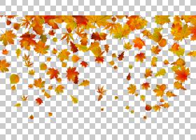 秋季图案背景,字体,枫叶,分支机构,设计,图案,花瓣,桔黄色的,黄色