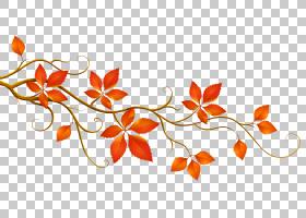 秋季图案背景,花卉设计,字体,线路,桔黄色的,图案,分支机构,设计,