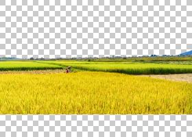 秋日的天空,地块,农业,草,草原,景观,草原,字段,种植园,天空,平坦
