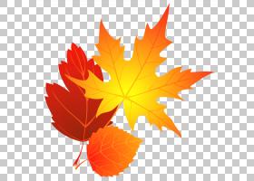 红枫树,桔黄色的,种,树,枫树,红色,浓度,博客,颜色,枫叶,叶,秋叶
