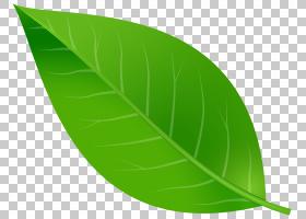 绿叶背景,字体,生产,种,蓝色,绿色,颜色,秋叶颜色,叶,