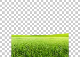 绿草背景,绿色,字段,种,高尔夫球,草族,天空,能量,软管,牧场,草原