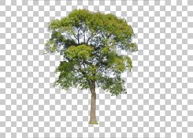 绿草背景,草,分支机构,木本植物,叶,种,资源,数据,树,