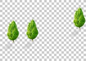 绿草背景,草,种,树,叶,