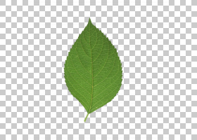 绿草背景,草,种,绿色,叶,