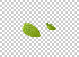 绿草背景,草,薄荷,花瓣,种,绿色,薄荷,叶,