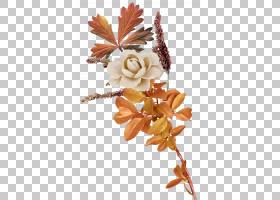 背景花,花,