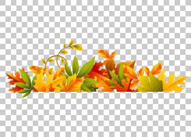 花卉剪贴画背景,花卉产业,桔黄色的,切花,插花,花卉设计,黄色,花