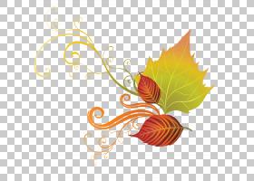 花卉图案背景,花卉设计,字体,线路,桔黄色的,设计,植物区系,生产,