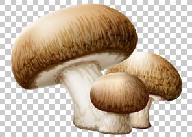 蘑菇卡通,配料,香菇蘑菇,蘑菇科,蘑菇类,药用蘑菇,蘑菇属,松茸,杏