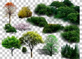 针叶树,植被,草,针叶树,分支机构,木本植物,室内植物,灌木,种,常