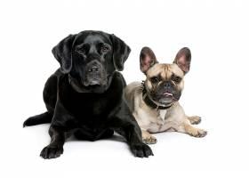 两只可爱的宠物狗