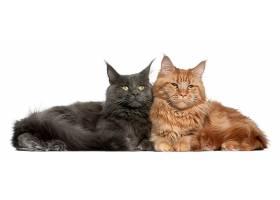 可爱的两只猫咪