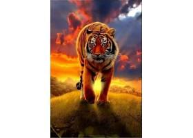 夕阳黄昏的老虎