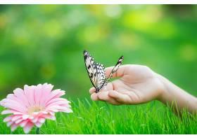 小孩的手与蝴蝶花朵