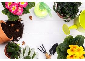花盆盆栽种植与花盆打理工具组合