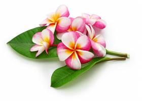 SPA用品花朵