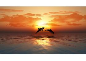 落日下的两条海豚